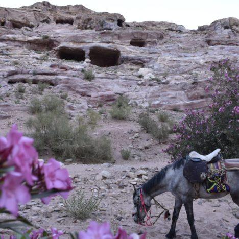 VISITARE IL DESERTO DEL WADI RUM